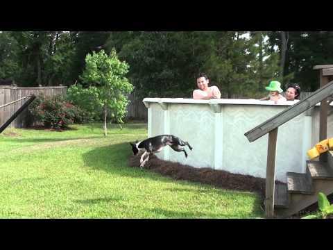 Dog Doing Flips!!