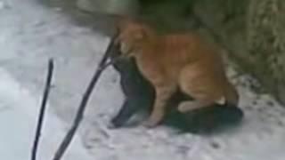 Олег Ебёт котЭ
