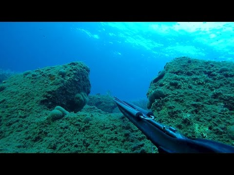 Spearfishing in Greece - Best moments!!!