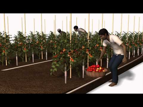 Wal-Mart India's direct farming system explained