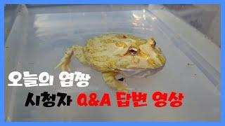 파충류Q&A답변 영상!