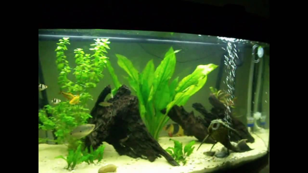 my juwel vision 180 tropical fresh water aquarium community setup youtube. Black Bedroom Furniture Sets. Home Design Ideas