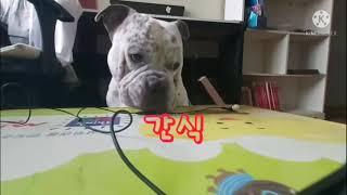 파프리카 먹는 강아지가 있다 ?  ㅣ 봉식이먹방  (F…