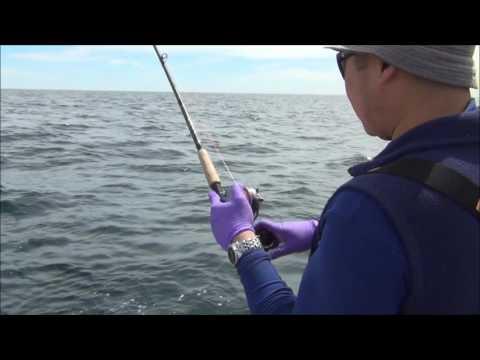 Light tackle haddock fishing