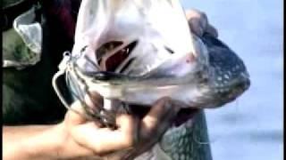 Диалоги о рыбалке. Хищник. Часть 1 (HD)
