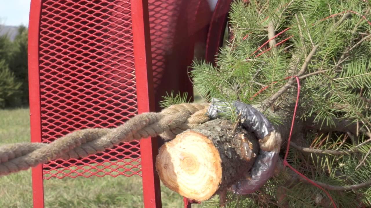 middleburg christmas tree farm wrapping up xmas tree - Middleburg Christmas Tree Farm