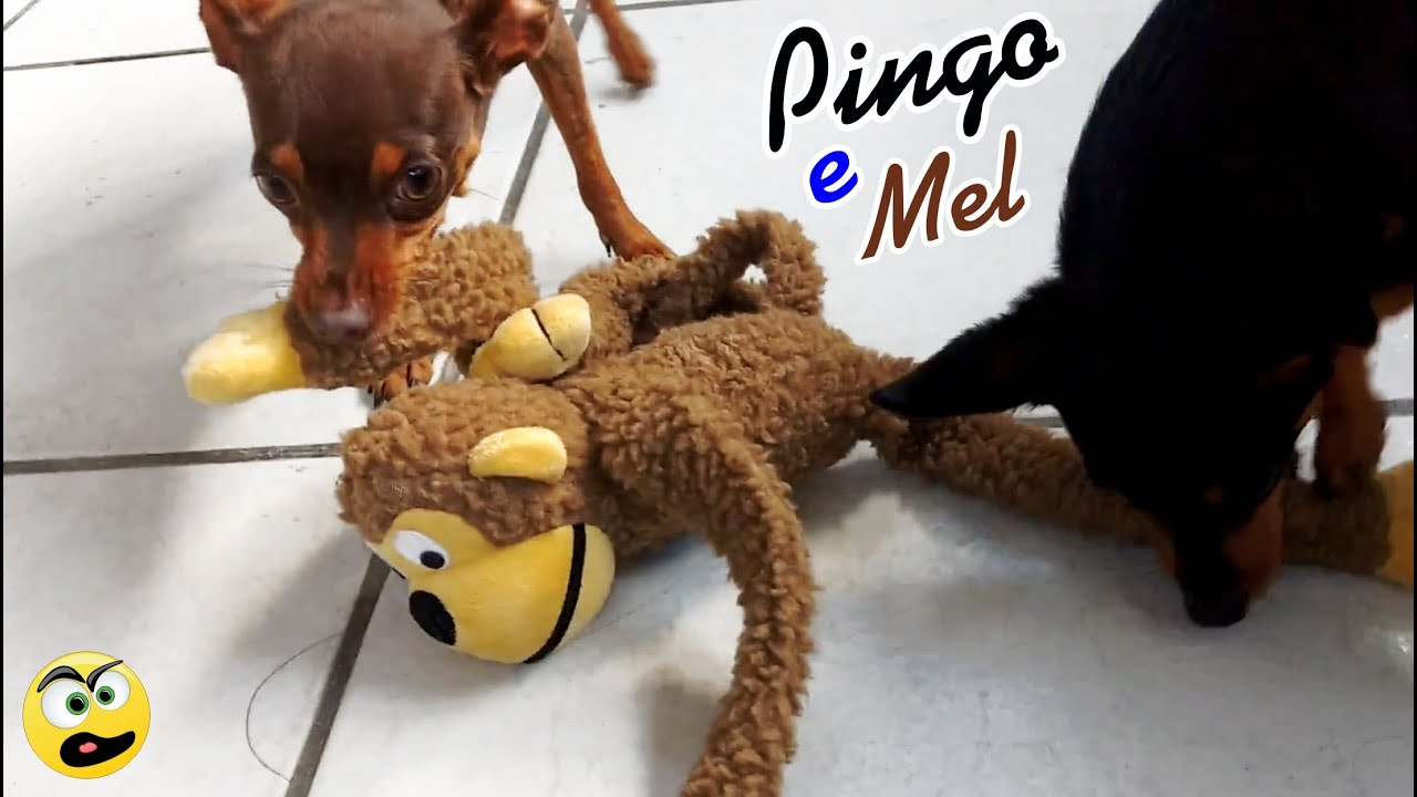 Pingo e Mel brincando com Macaco Baco