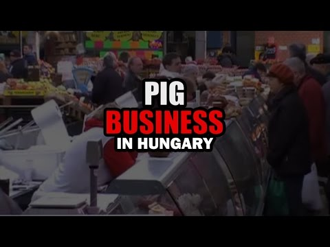 Pig Business in Hungary - English subtitles