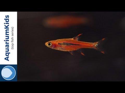 THE TOP 10 FRESHWATER NANO FISH (HD)