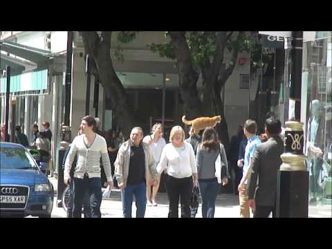 A Street Cat Named Bob - A Man walking with a Ginger Cat on his shoulder, London - 8th June 2013