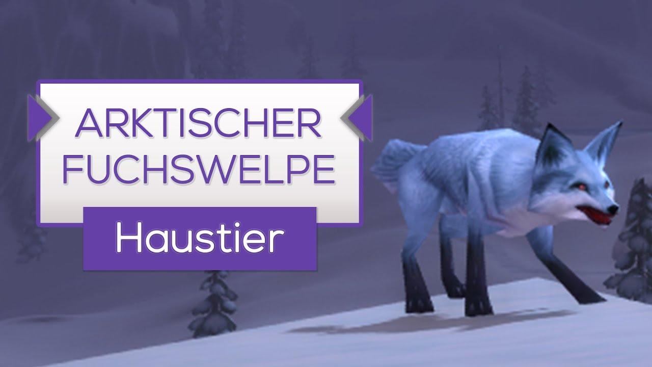 Arktischer Fuchswelpe Mit Addon Schnell Farmen Haustier Tipp Wow Youtube