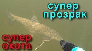 Подводная охота СПЛАВОМ!!! Spearfishing in Volga! Трофейная подводная охота на Волге в июле 2019!!!