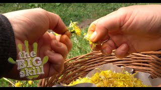 How to make you own Dandelion Honey -  with Lizzy from Pippin & Gile