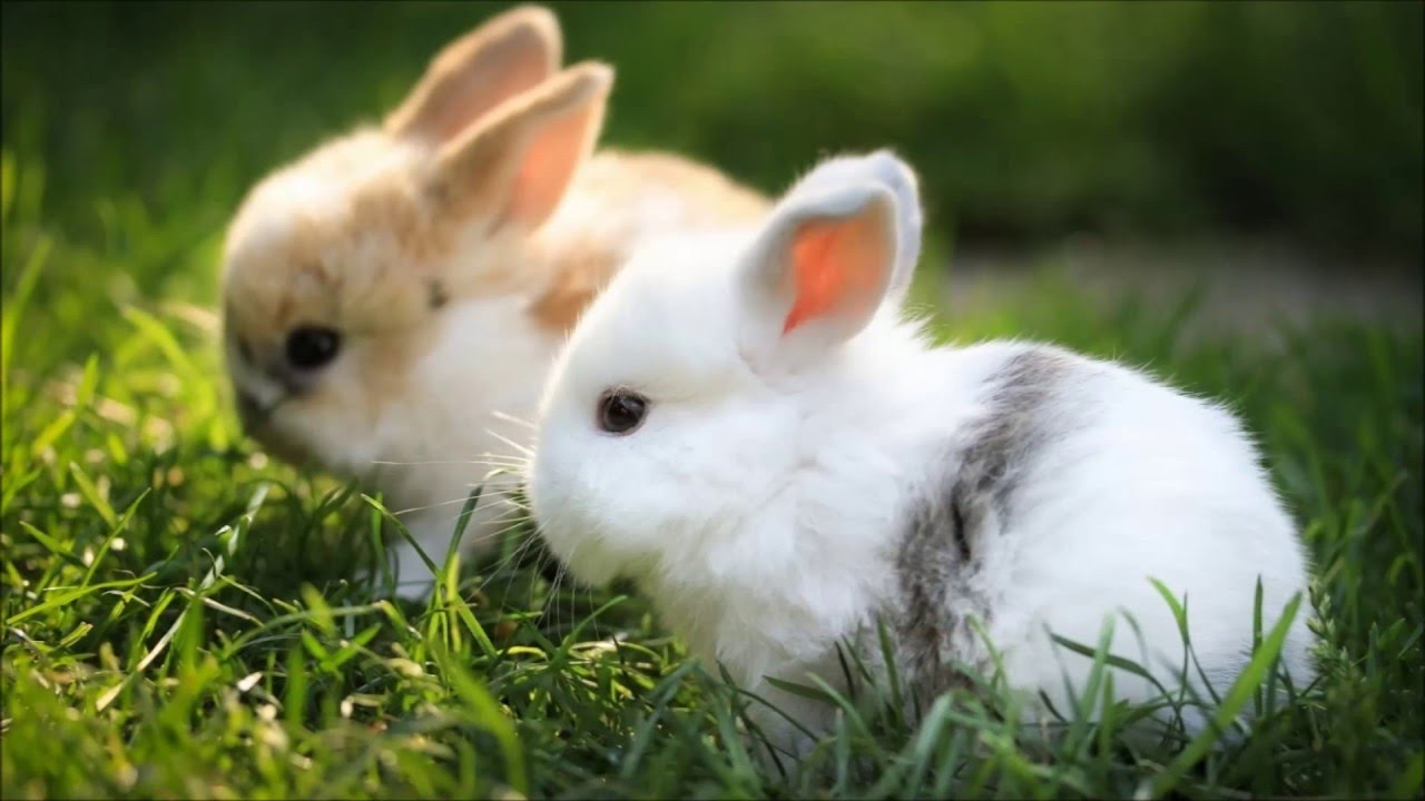 cute rabbit slideshow