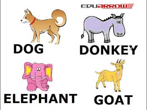 animals domestic children learning