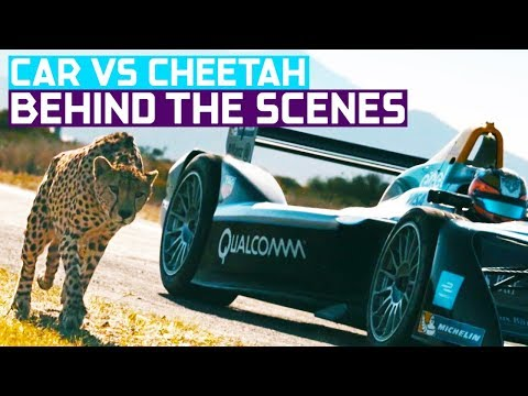 Drag Race: Formula E Car vs Cheetah (Wildlife vs Car Documentary)