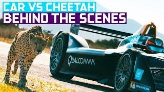 Drag Race: Formula E Car vs Cheetah (Wildlife vs Car Documentary)