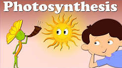 Photosynthesis | It's AumSum Time