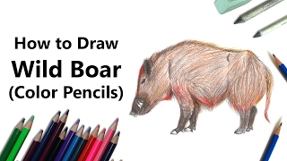 How to Draw a Wild Boar with Color Pencils [Time Lapse]