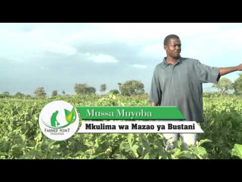 FARMER POINT TANZANIA DUMILA MOROGORO  YOUTUBE PROGRAM