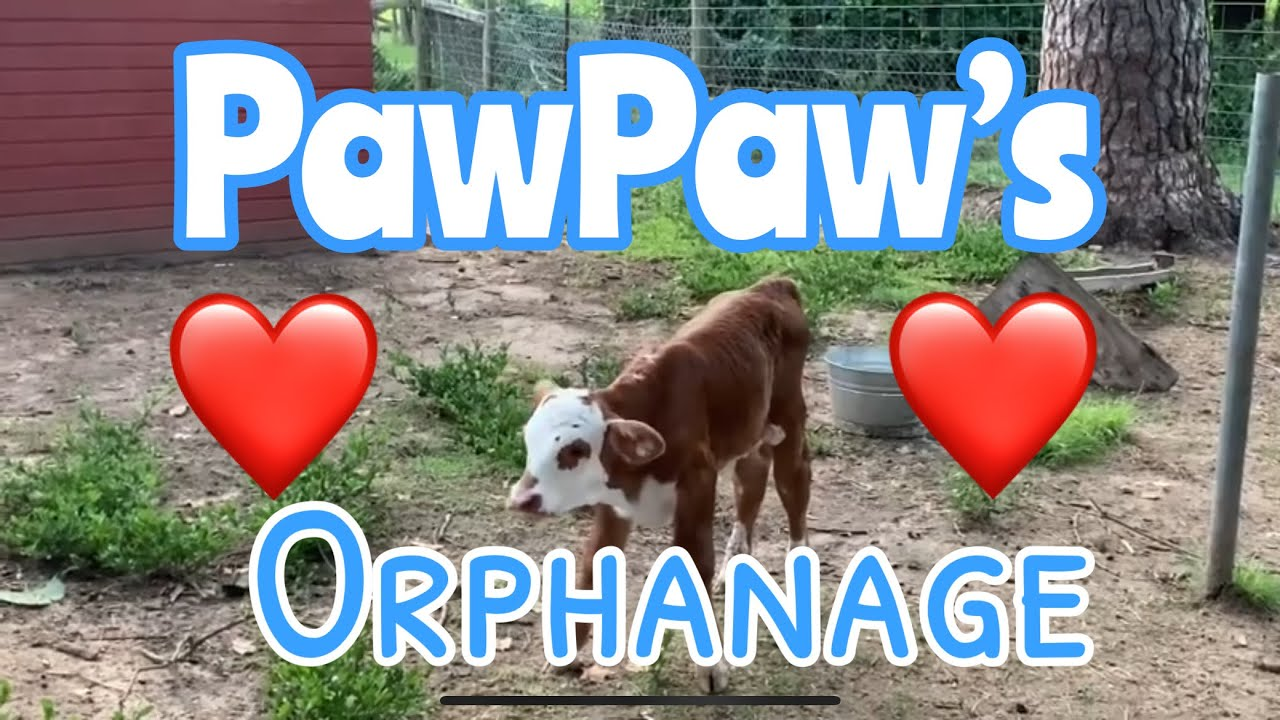 Download Pawpaws orphanage