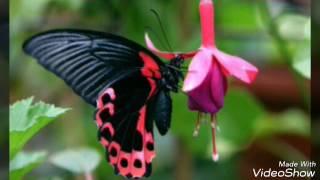 Самые красивые и редкие бабочки мира