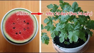 How to grow watermelons in pots from melon