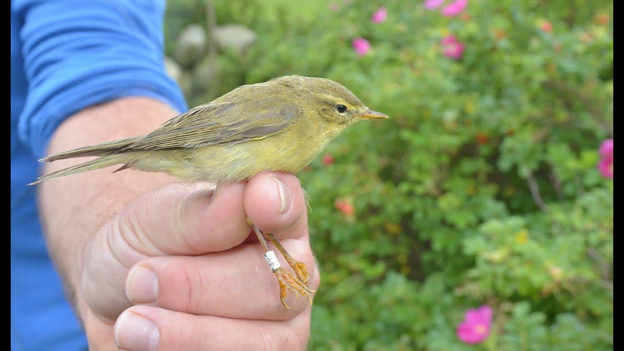 Download Revtangen Ornitologiske Stasjon