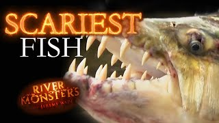 Scariest Fish | River Monsters