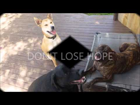 LAPAK video intro how to treat dog skin allergies