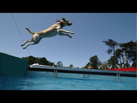 Funny Dogs Swimming in The Air [HD 2014]