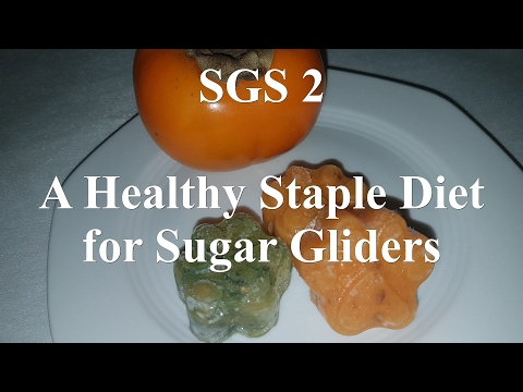 A Healthy Staple Diet For Sugar Gliders | Preparing The SGS 2 Diet