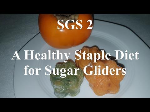 A Healthy Staple Diet For Sugar Gliders | Preparing The SGS 2 Diet
