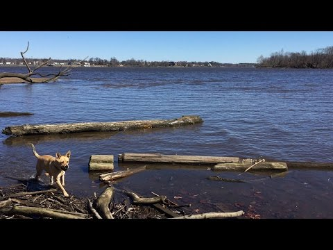 College students log trash along Delaware River cove