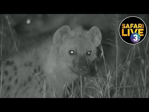 safariLIVE on SABC 3 - Episode 10