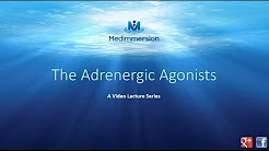 The Adrenergic Agonists