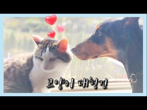 Cats Don't Care Funniest Videos of 2016 Compilation | Kyoot Animals from YouTube · Duration:  5 minutes 40 seconds