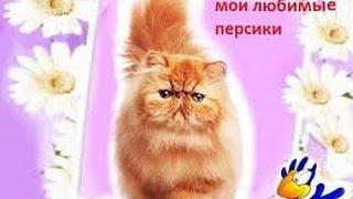 как приучить персидского котенка к туалету