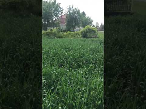 The land we purchased in Hungary