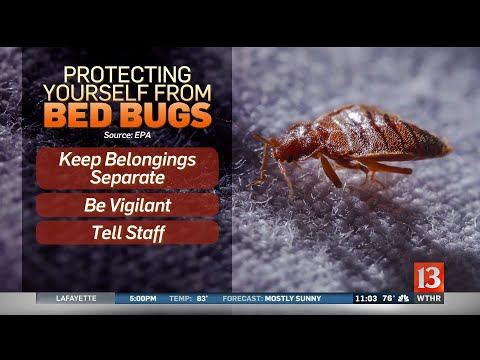 Bed Bugs Inside Marion Theater