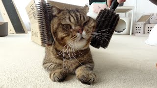 This Big Headed Cat Needs Special Attention! (ENG SUB)