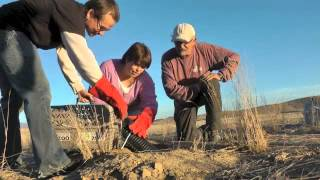 Black-footed Ferret Reintroduction November 2012