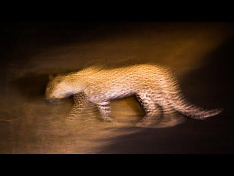 Kruger night time nature sounds: Lower Sabie | Africa wildlife & animal noises Kruger National Park