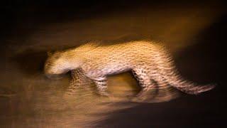 Kruger night time nature sounds: Lower Sabie | Africa wildlife & animal noises Kruger National P