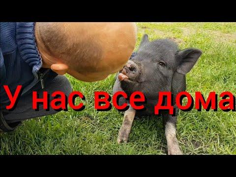 Ко мне вернулась жена , а я уже научил свинью целоваться! Привезла на хутор полный багажник вещей х