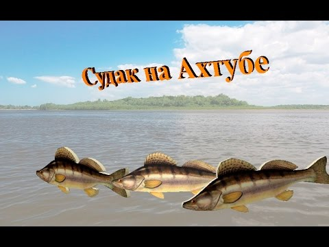 Русская Рыбалка 3.99 (Russian Fishing) Судак на Ахтубе