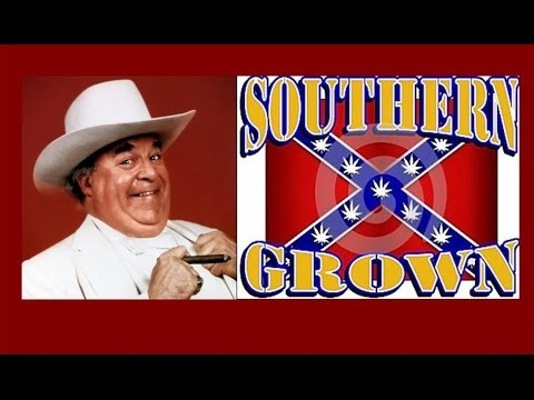 Grow Southern Rebel 'Boss Hogg' Marijuana