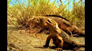 Galapagos Islands National Geographic