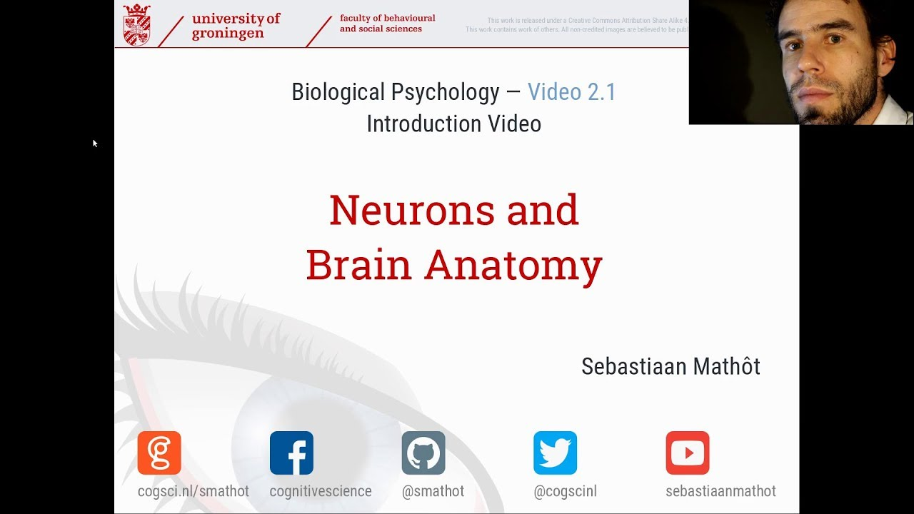 Introduction to Neurons and Brain Anatomy | Biological Psychology ...