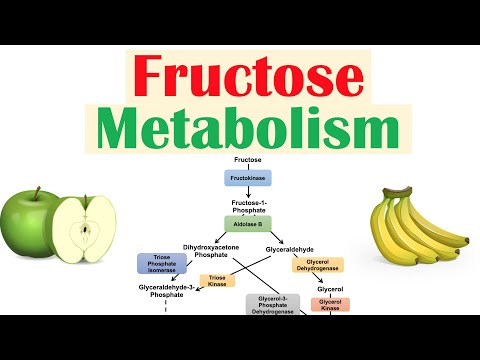 Fructose Metabolism: Absorption, Fructolysis, Regulation and Role in Obesity
